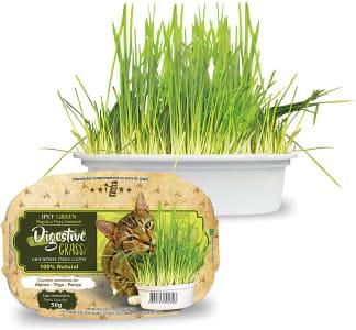 Ipet Green Digestive Grass Graminha Para Gatos 50G IPET para Todos os tamanhos de raça Todas as fases - Sabor Outro