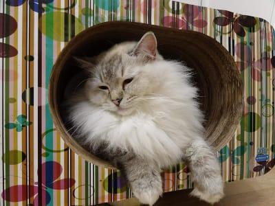 Arranhador Toca Cama Cat Box Simples Oval Borboletas Pet Games para Gatos